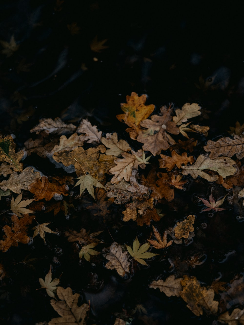 brown maple leaves on ground