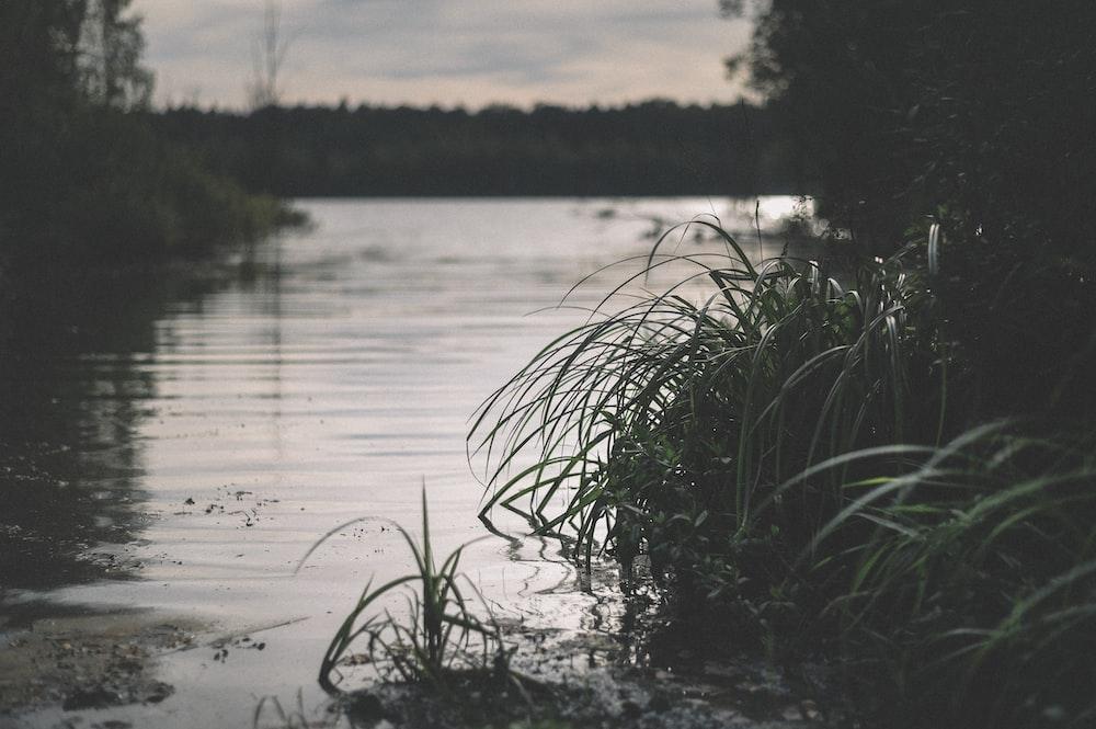green grass on lake during daytime