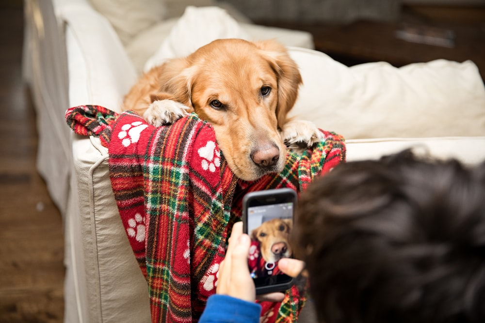 Best Dog Training Apps for iPhone - Check Them Out!