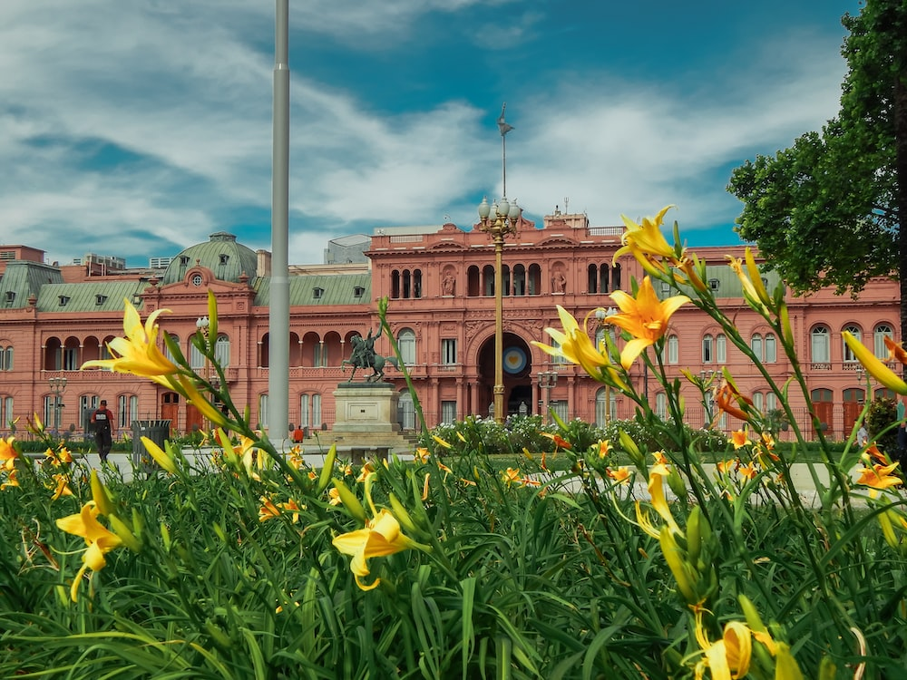 yellow flowers in front of white and brown building