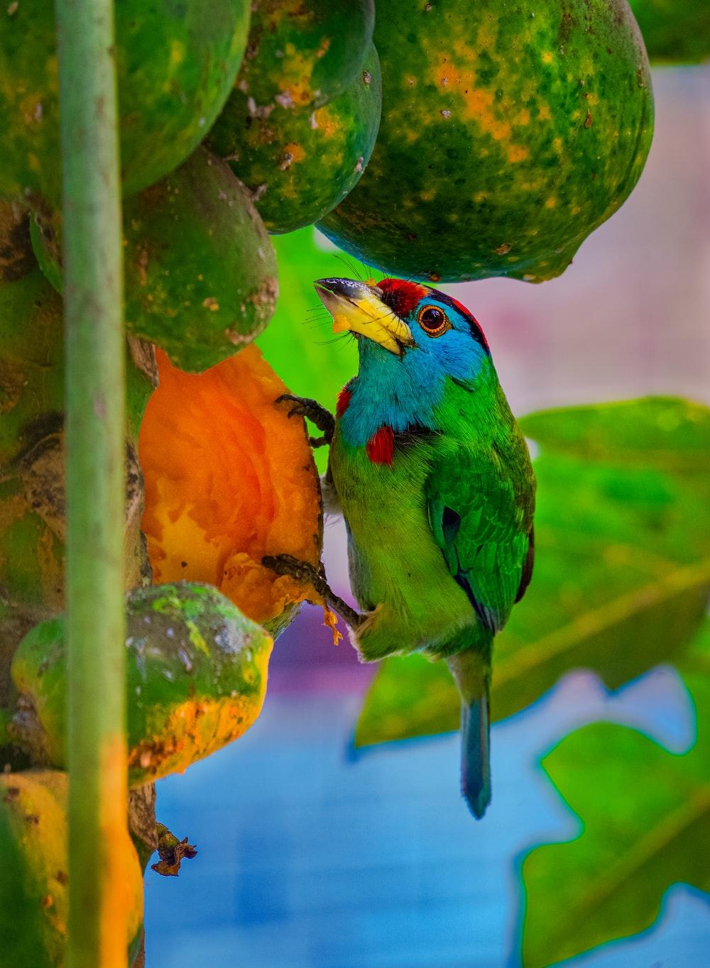 green and orange bird on green fruit