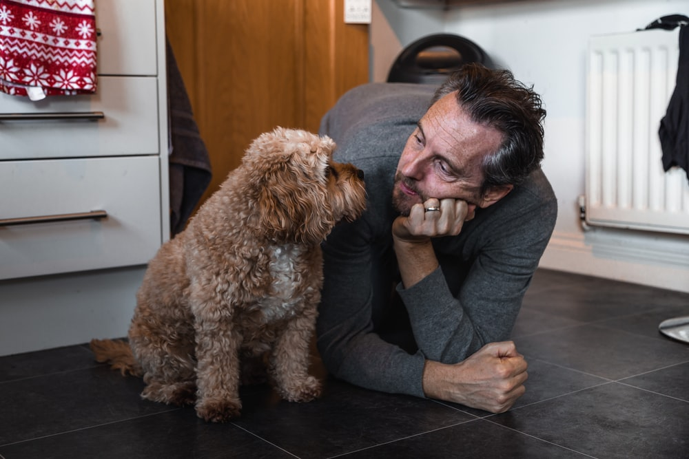 man in black sweater holding brown long coated small dog