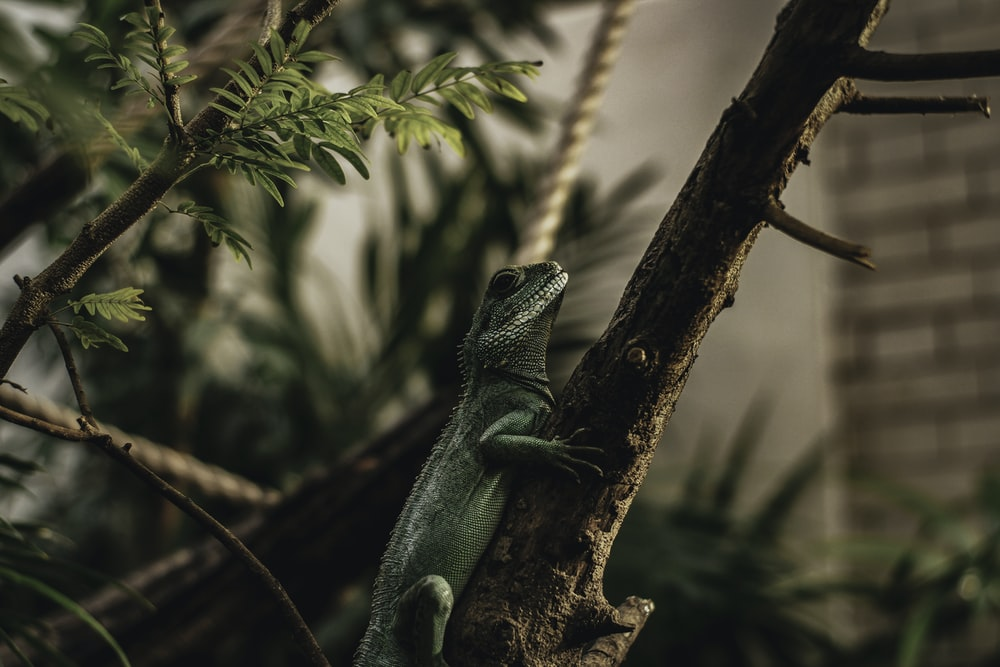 green lizard on brown tree branch during daytime