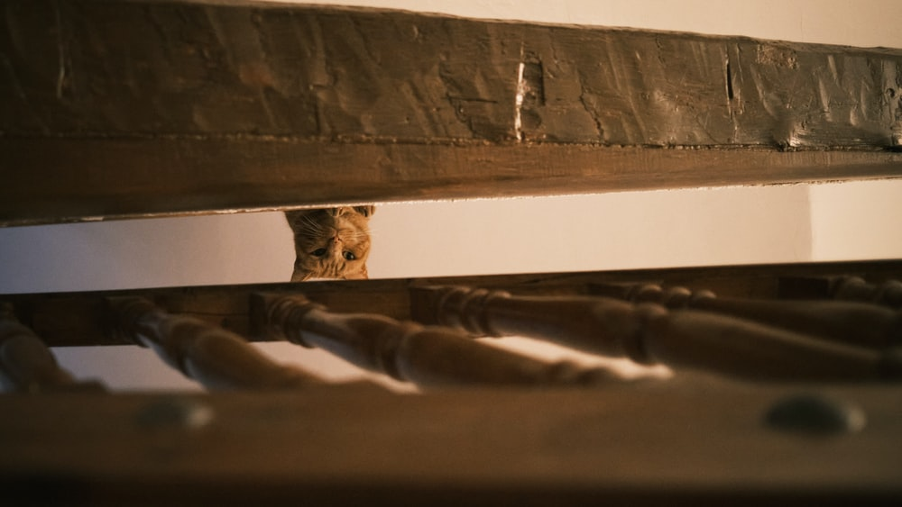 brown tabby cat on brown wooden staircase