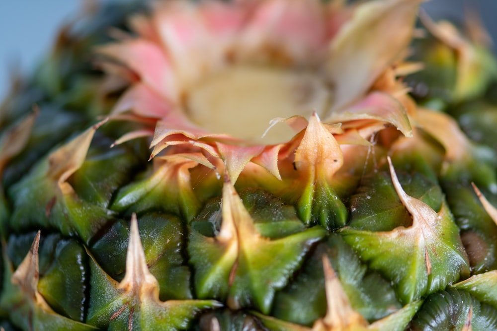green and pink pineapple fruit