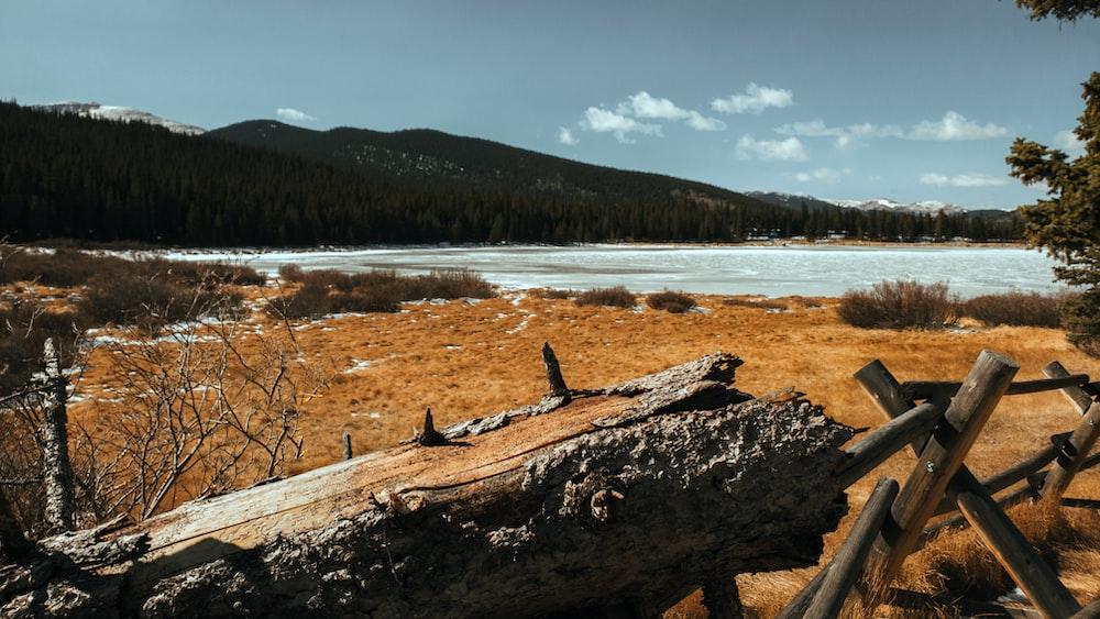 brown wood log on brown field during daytime