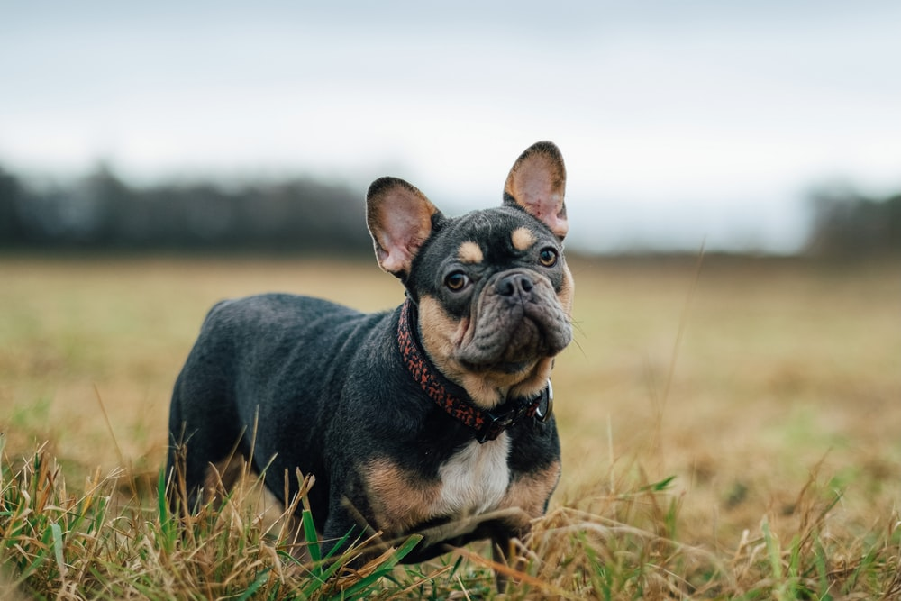 black and brown short coated puppy on brown grass field during daytime