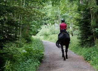 man in red jacket riding black horse on road during daytime