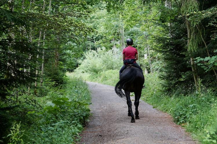 Horseback Riding, Things to do in Husavik