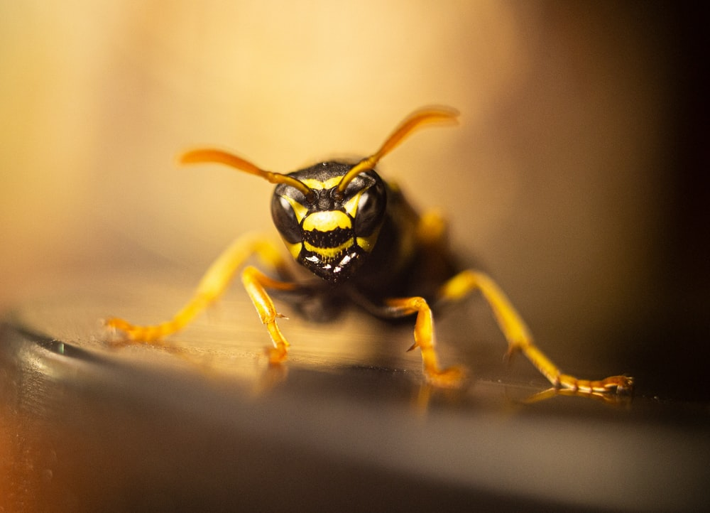 yellow and black bee in close up photography