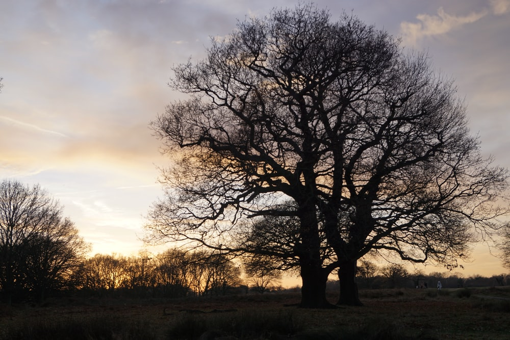 leafless tree on brown grass field during daytime