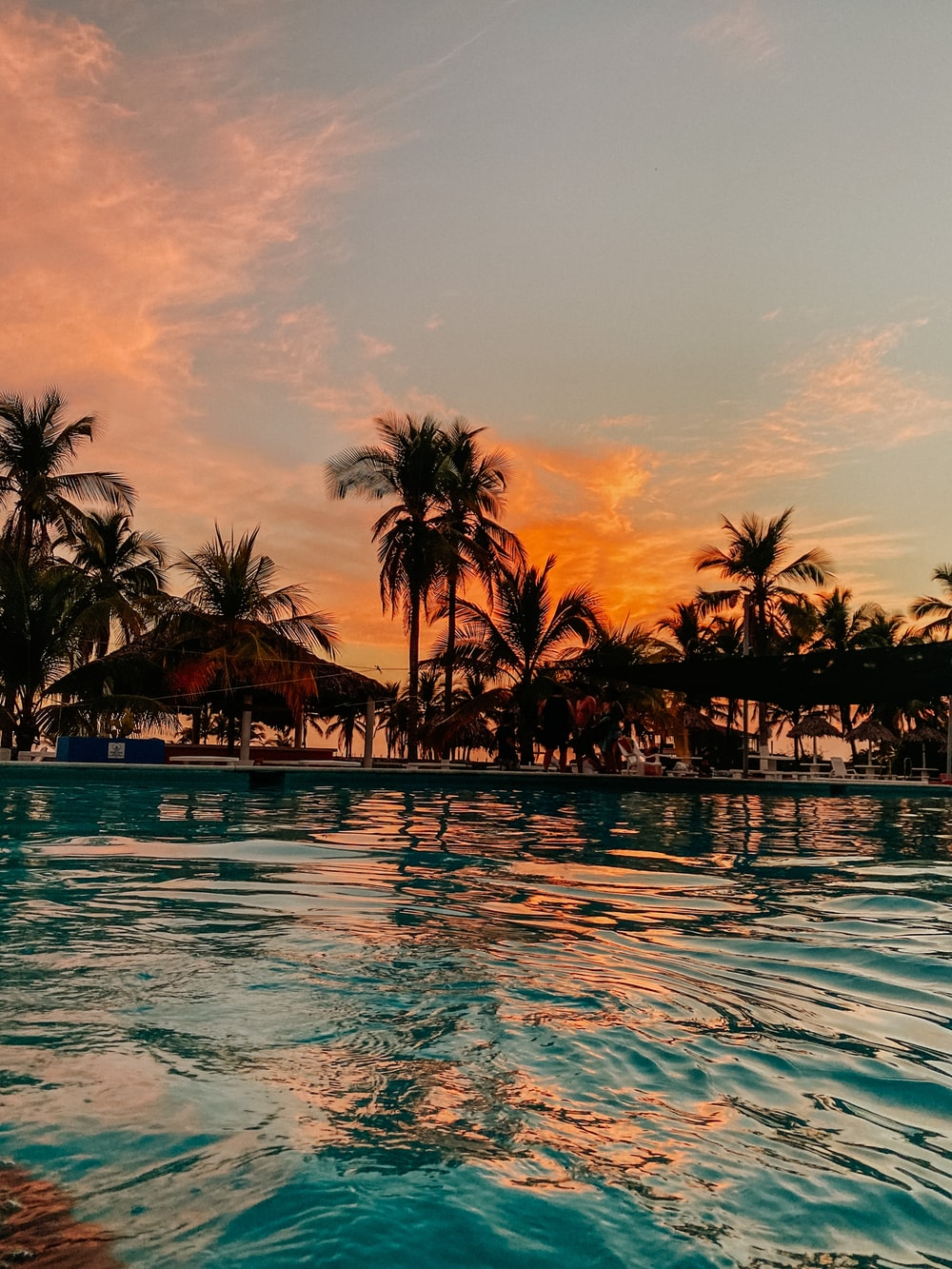 palm trees on body of water during sunset