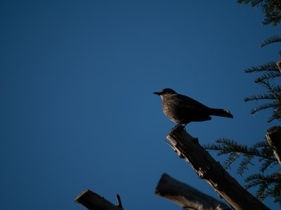 black bird perched on brown tree branch