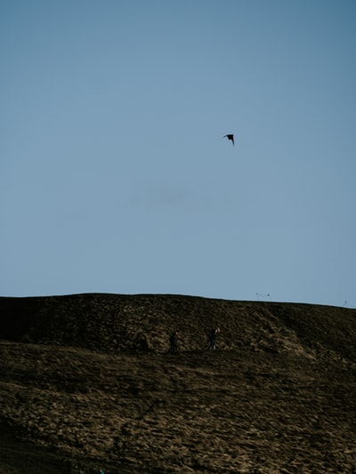 silhouette of bird flying over the mountain during daytime