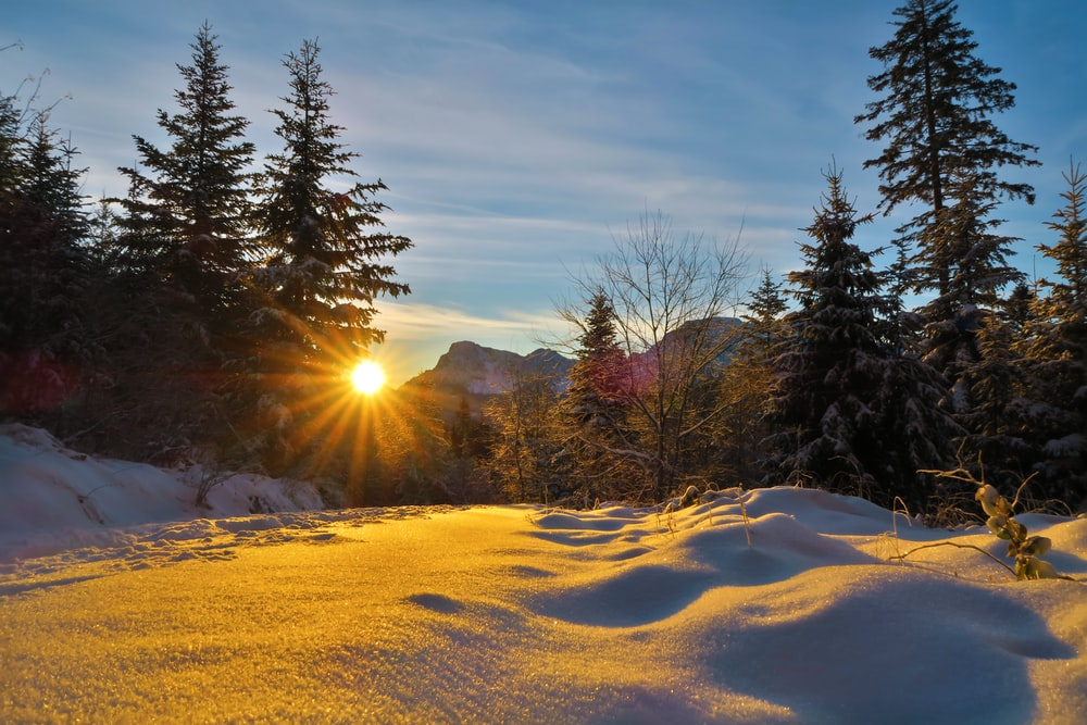 green trees on snow covered ground during sunrise