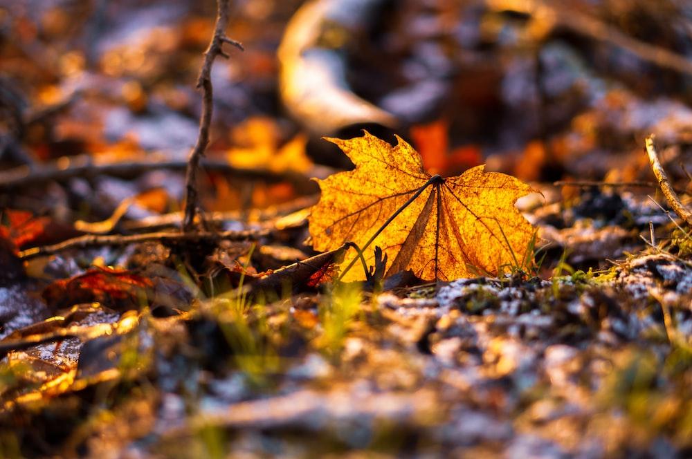 brown leaf on ground during daytime