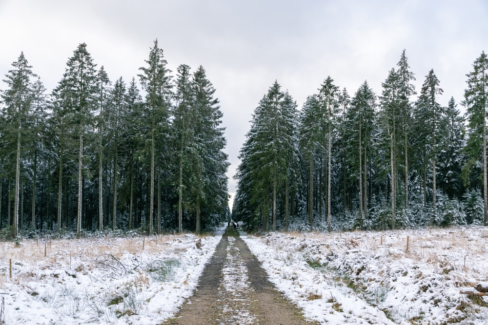 green pine trees on snow covered ground under white cloudy sky during daytime