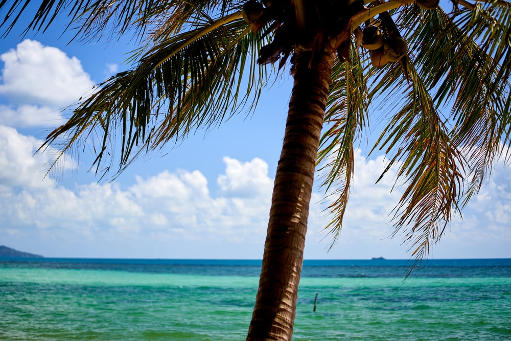 coconut tree near sea under blue sky and white clouds during daytime
