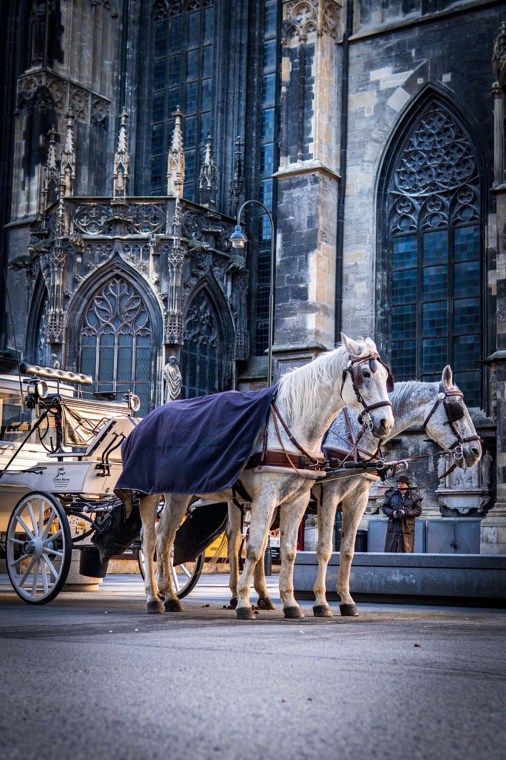 white horse with carriage in front of gray concrete building
