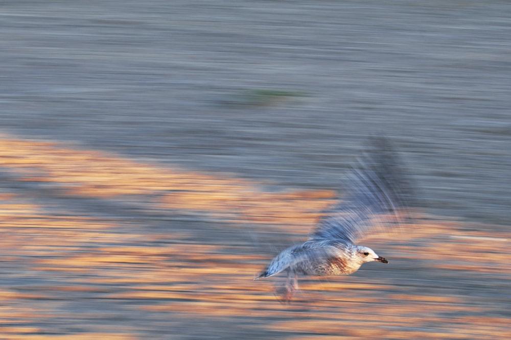 grey and white bird flying over the water during daytime