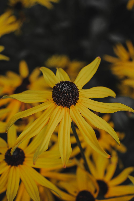 yellow flower in macro shot