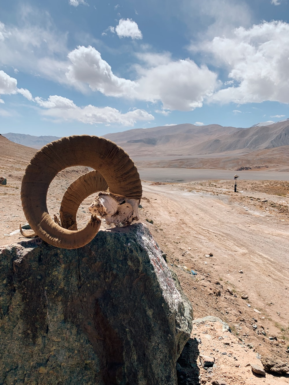 brown and white spiral ring on brown rock