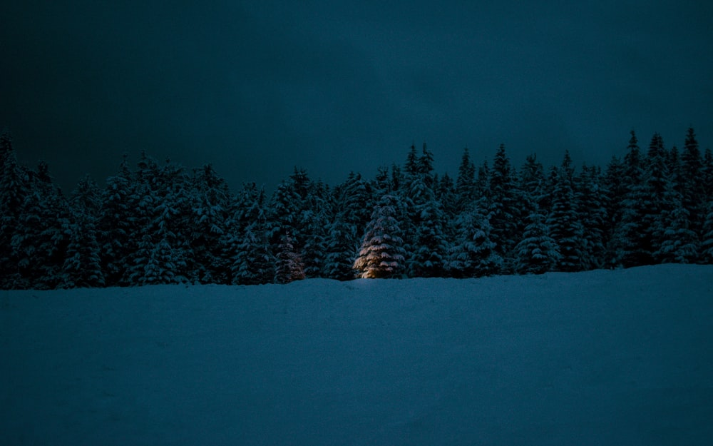 green pine trees on snow covered ground during night time