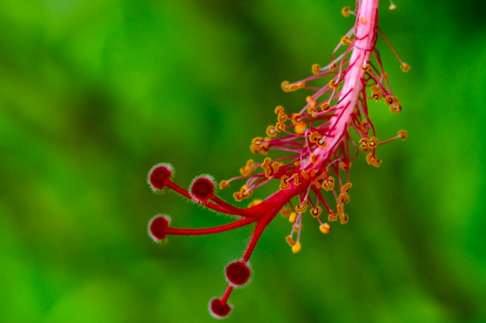 red and yellow plant stem