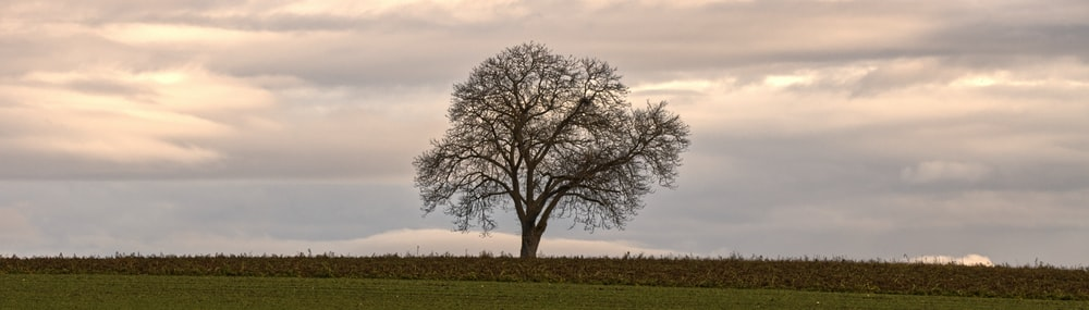 leafless tree on green grass field during daytime