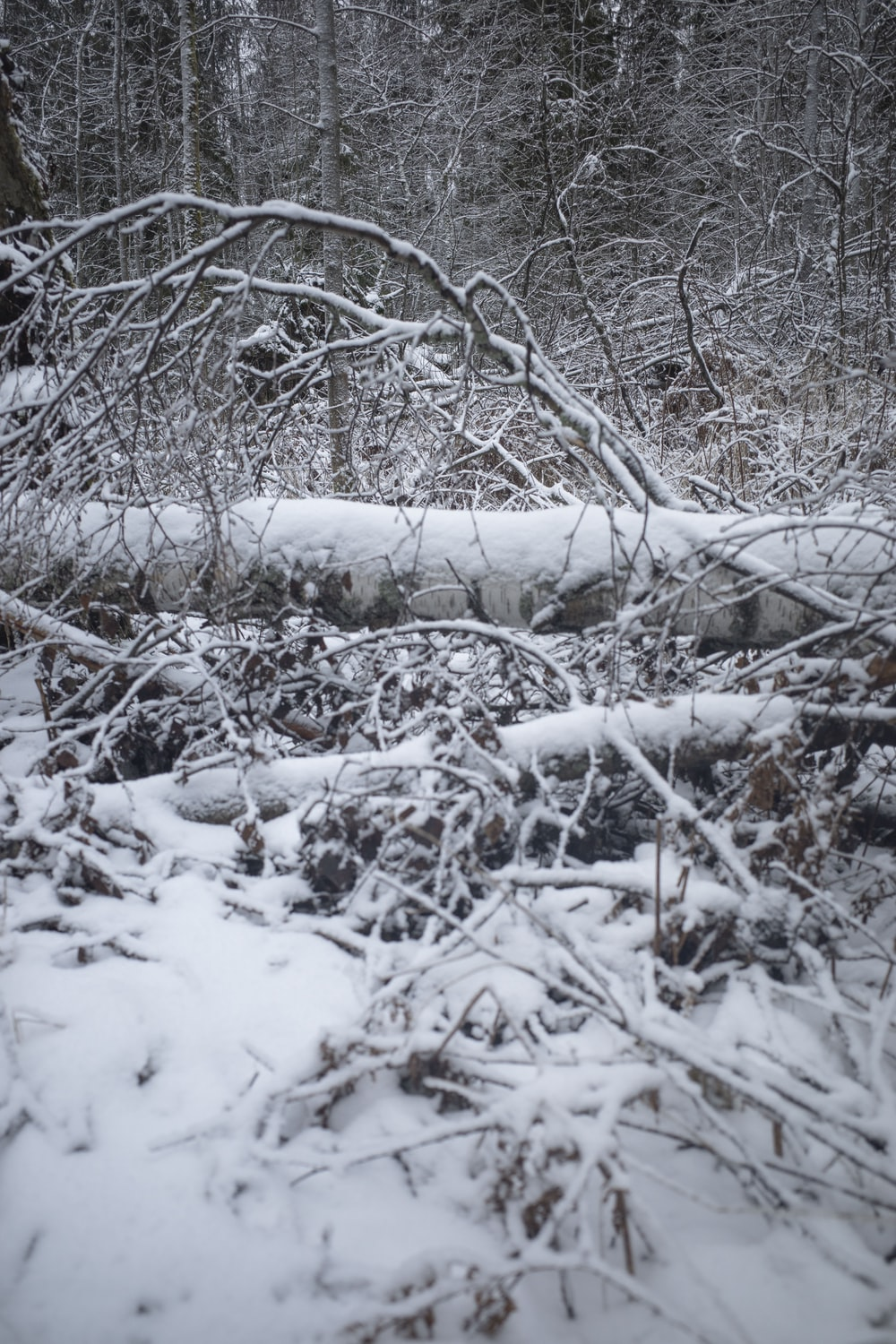 brown tree branches covered with snow