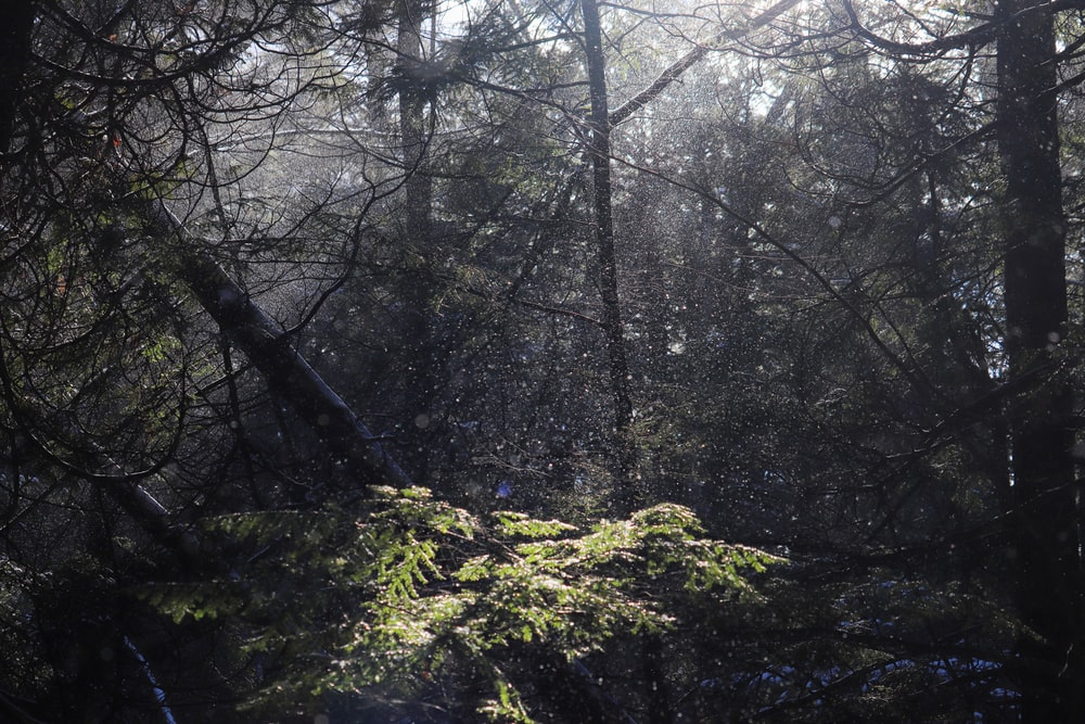 green moss on brown tree