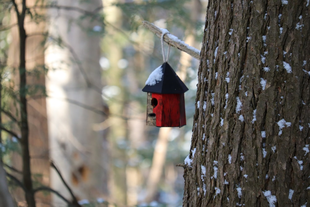 red and white wooden birdhouse on brown tree