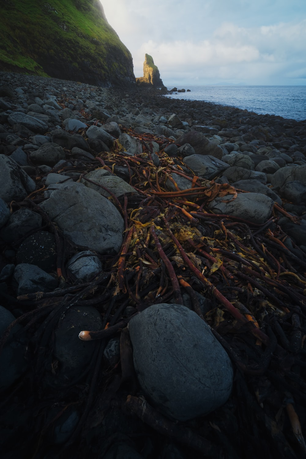 brown dried fish on black rocks near body of water during daytime