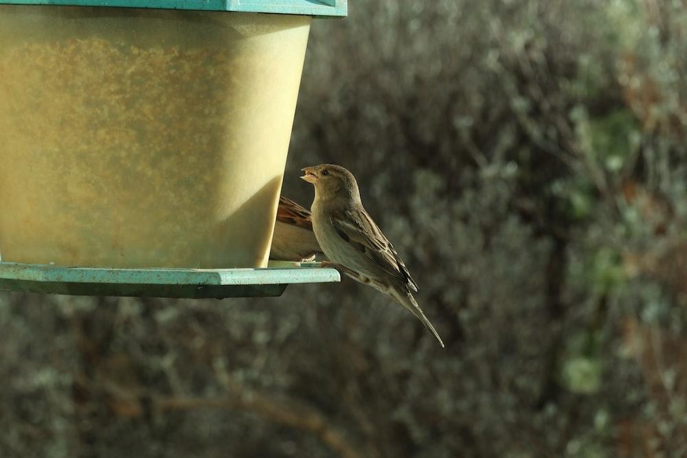 brown bird on blue bird feeder
