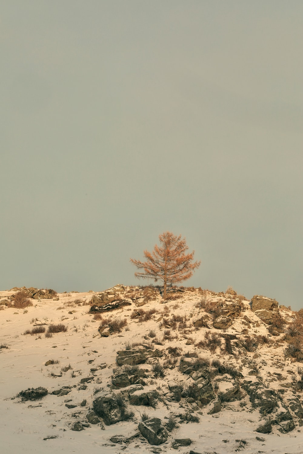 brown bare tree on brown sand under gray sky