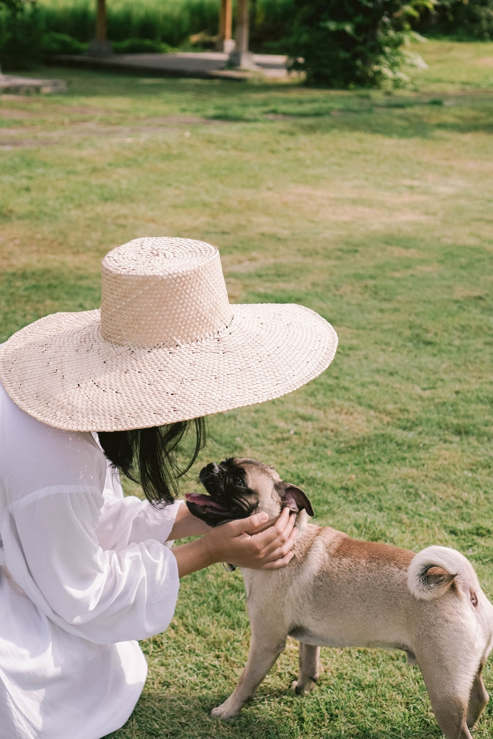 fawn pug wearing white hat