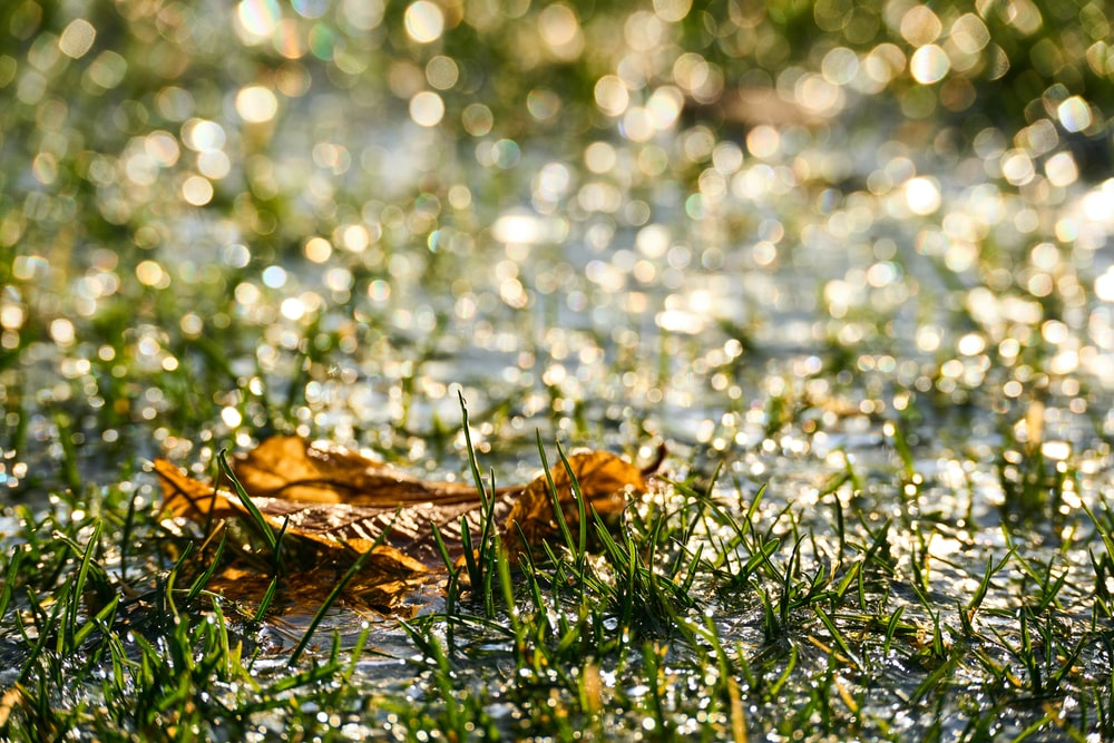 brown dried leaf on green grass during daytime
