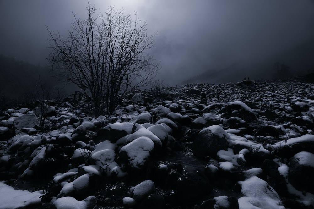 grayscale photo of bare trees on rocky ground