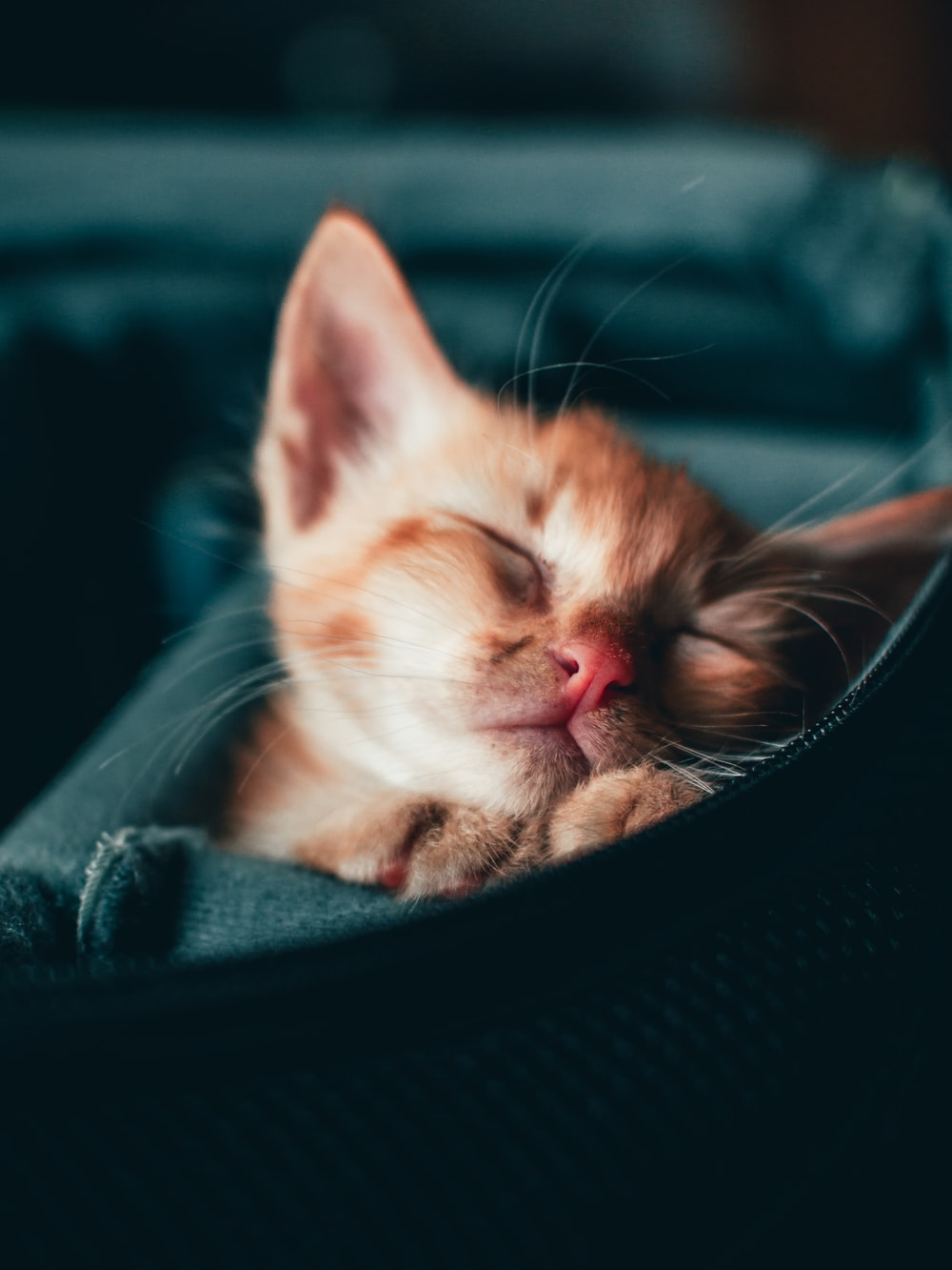 orange tabby kitten on black textile
