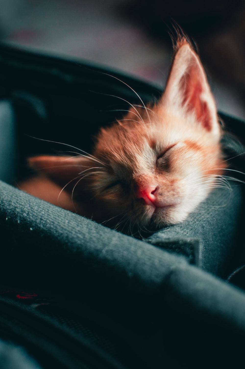 orange and white tabby kitten on black textile