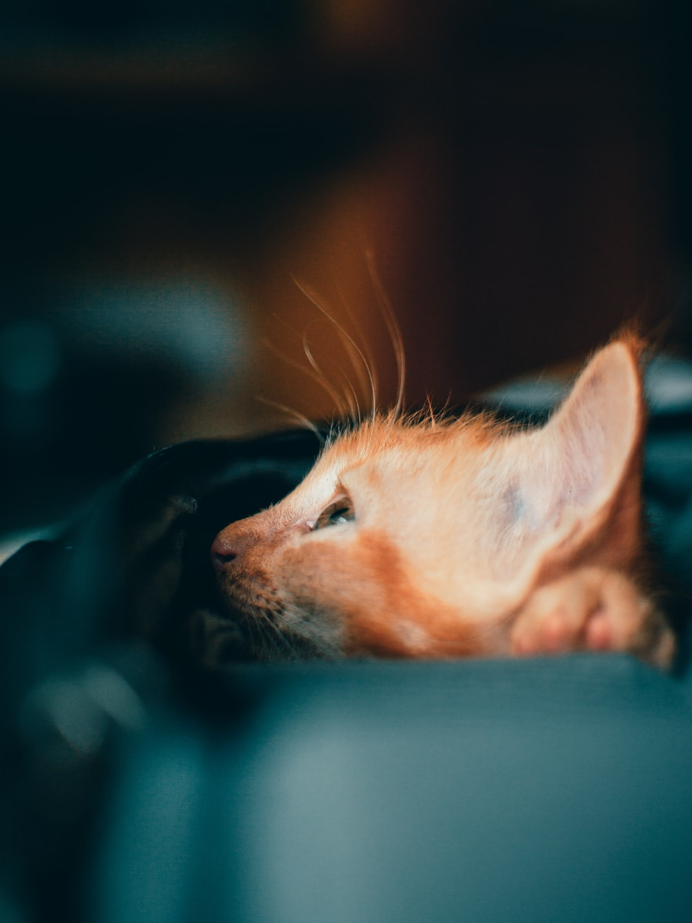 orange tabby cat lying on blue textile