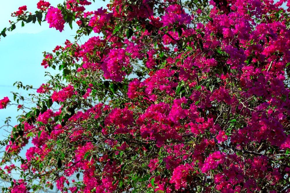 pink flowers under blue sky during daytime