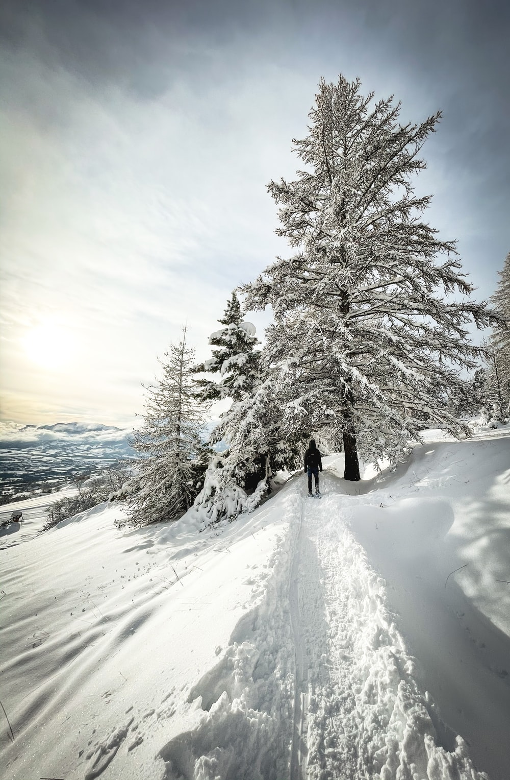 person walking on snow covered pathway between trees during daytime