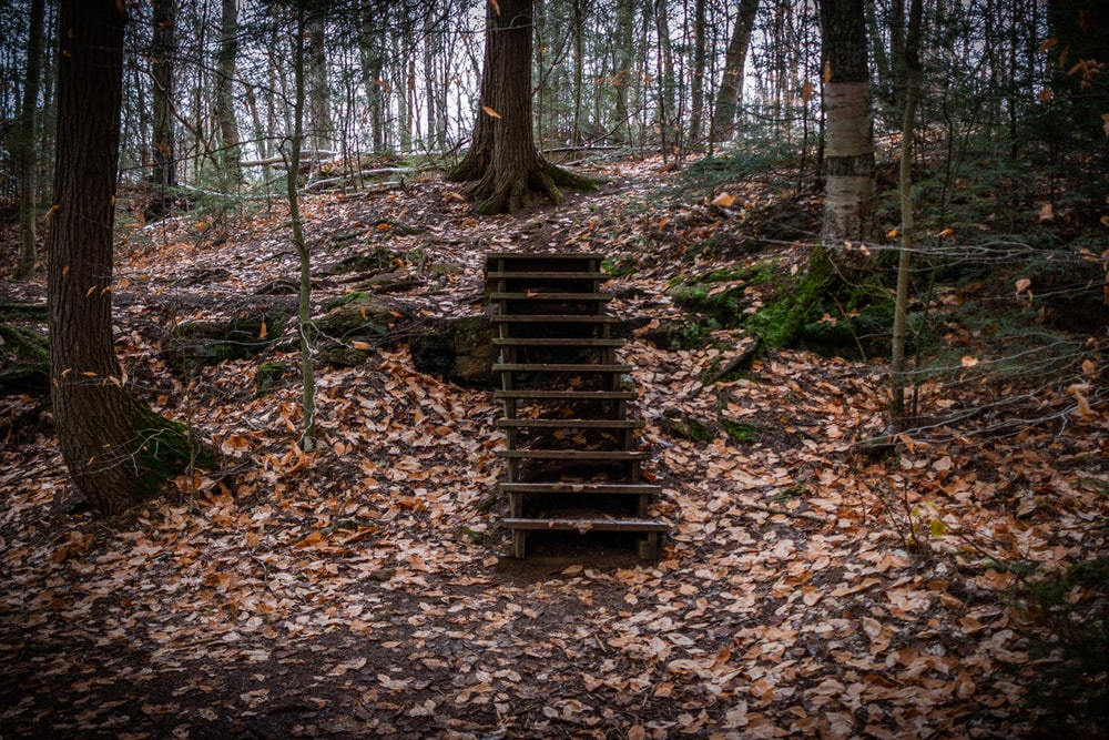 brown wooden stairs in the middle of the woods