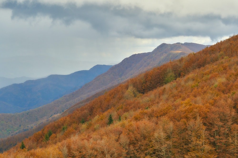brown and green trees near mountain under white clouds during daytime