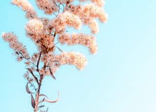 white and brown tree under blue sky during daytime