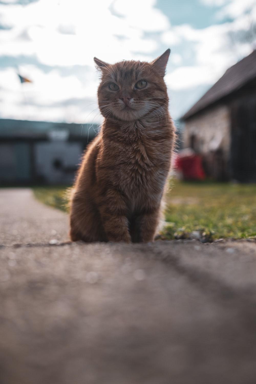 brown cat on gray concrete floor