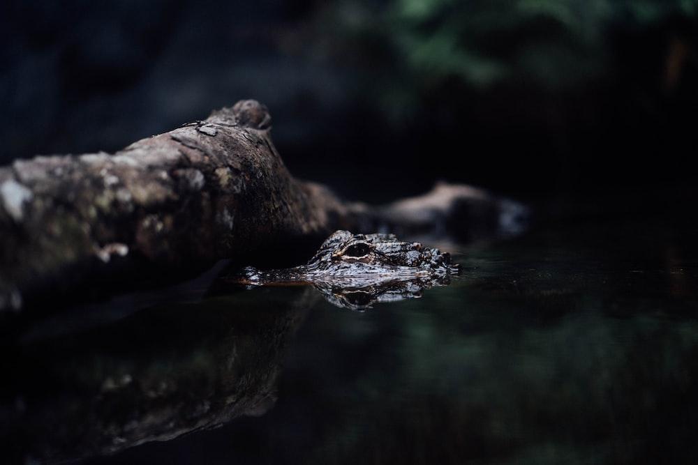 brown and black frog on brown wood