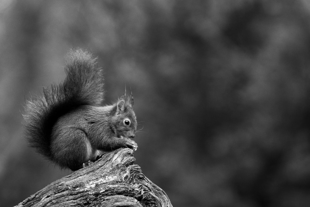 brown squirrel on brown tree branch
