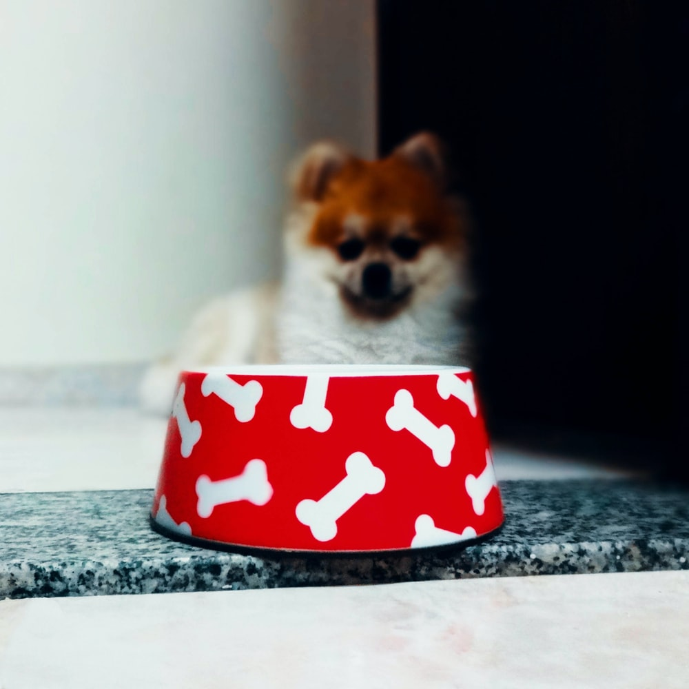white and brown pomeranian puppy in red and white polka dot ceramic mug